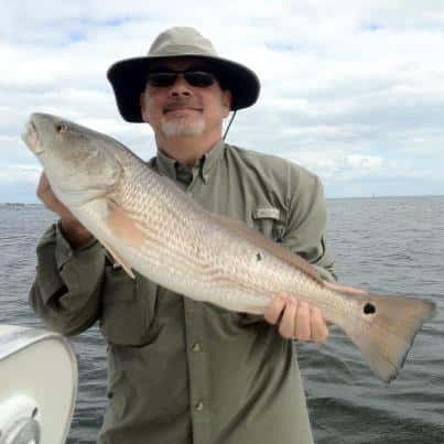 Shallow point charters vinoy hotel st petersburg fishing for Red fish taste