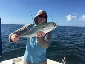 Bonita and King Mackerel with Black Tip Sharks
